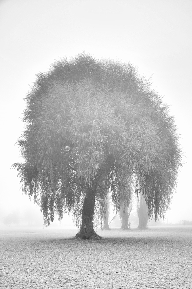 Silent Tree   Michael Götze Photographie